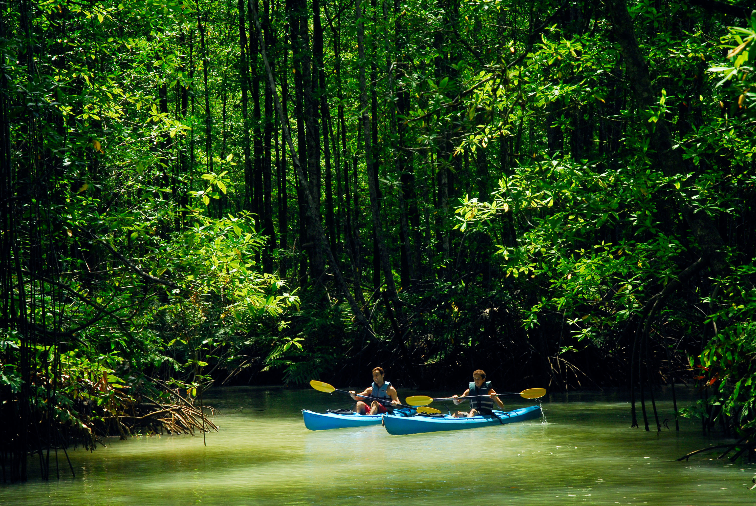 Adventure All-inclusive Budget Eco Jungle Outdoors Sport tree outdoor habitat Nature green natural environment Boat Forest River vehicle canoe bayou boating rainforest woodland surrounded wooded