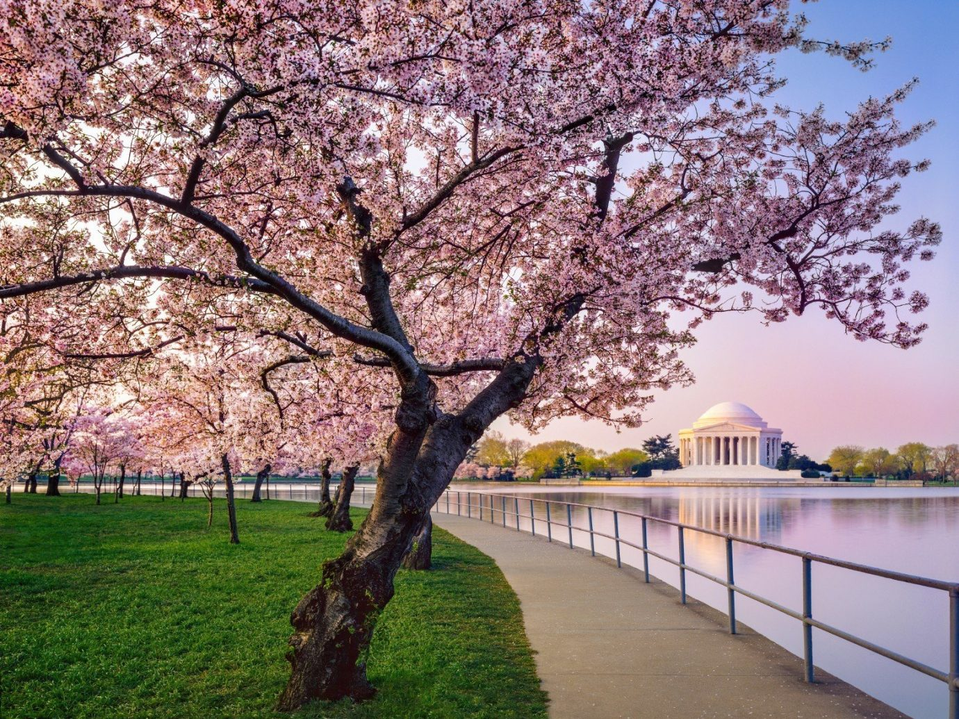 Travel Tips tree grass outdoor sky flower plant blossom cherry blossom spring park branch oak surrounded