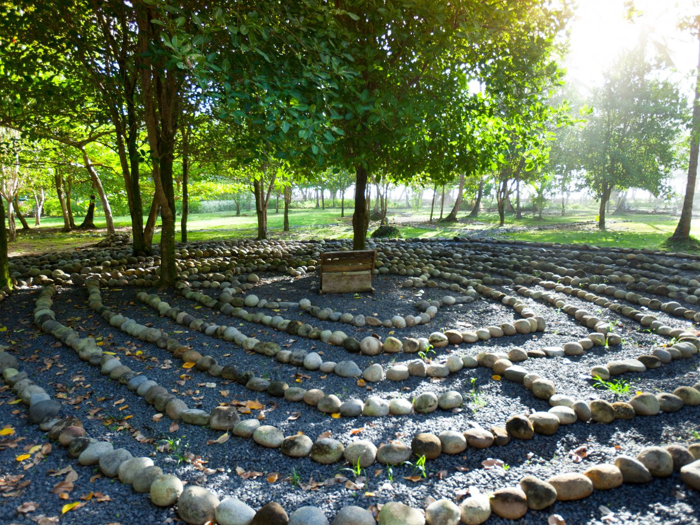 Eco Grounds Rustic Trip Ideas Wellness tree outdoor Garden yard outdoor structure backyard lawn plantation flower