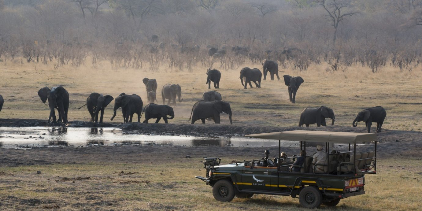Hotels Luxury Travel Outdoors + Adventure Travel Tips Trip Ideas outdoor grass field wilderness atmospheric phenomenon herd plain Wildlife Safari savanna mammal rural area Adventure cattle