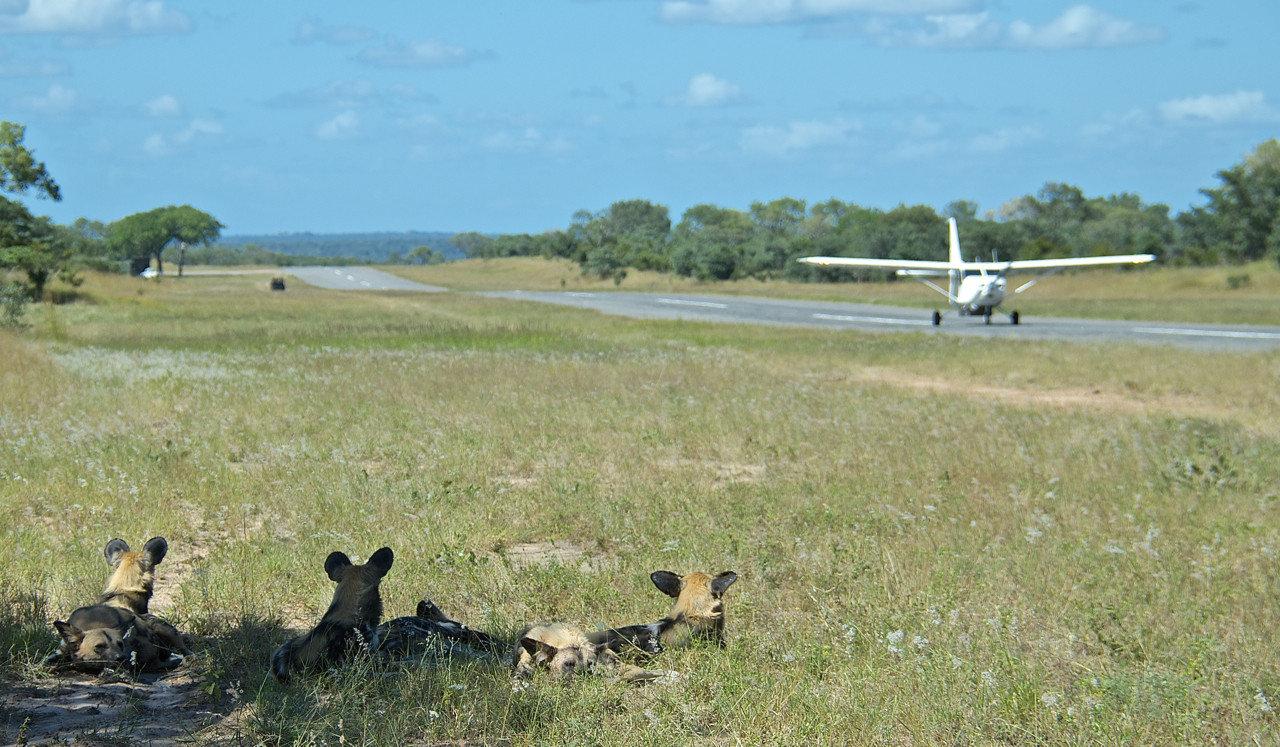 Trip Ideas grass outdoor sky field pasture grassland ecosystem plain prairie Adventure savanna Safari Dog wild dog day