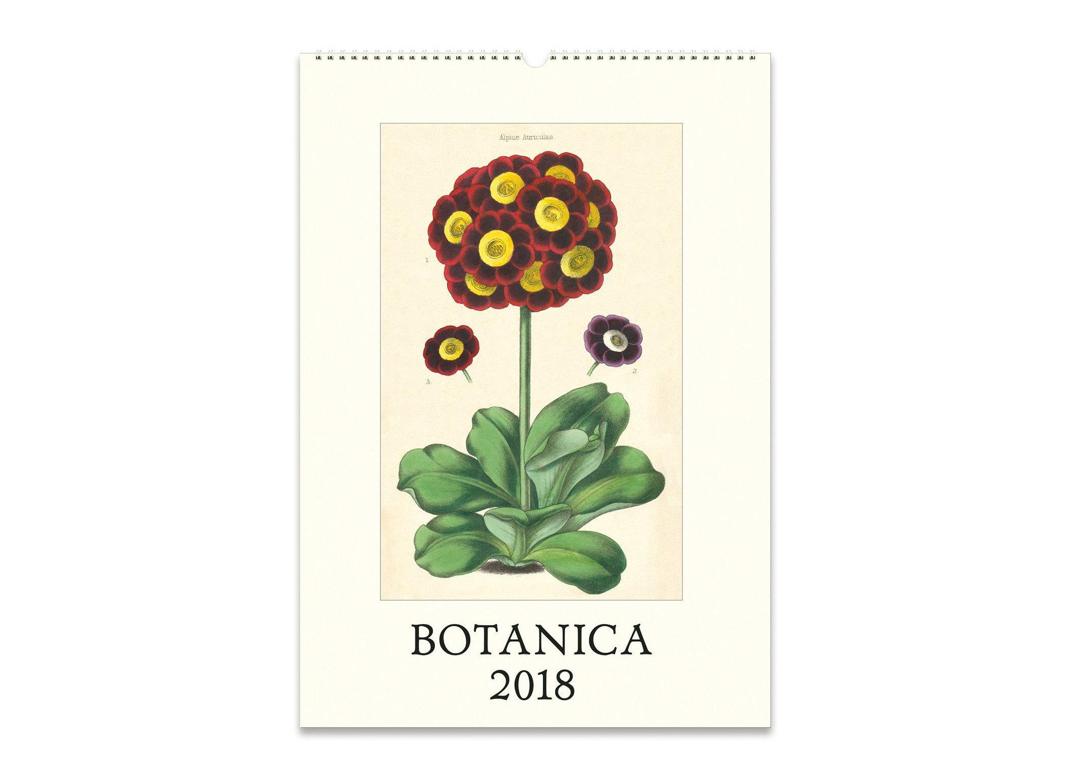 Travel Shop flower flora flowering plant plant petal floral design font product creative arts cut flowers