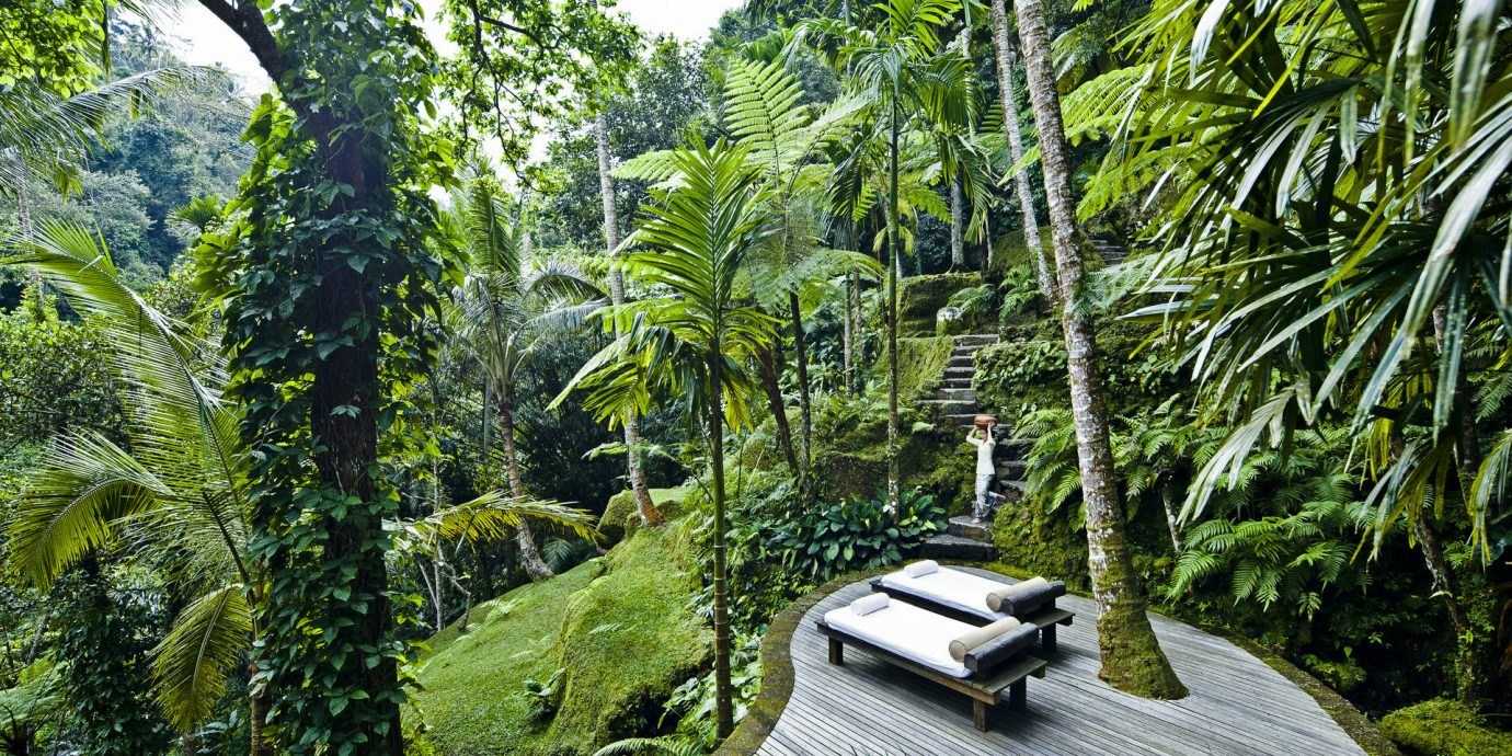 Health + Wellness Hotels Jetsetter Guides Spa Retreats Trip Ideas tree outdoor habitat plant vegetation Nature natural environment rainforest Forest ecosystem botany Jungle old growth forest woodland arecales plantation landscape tropics Garden biome botanical garden palm area surrounded lined wooded