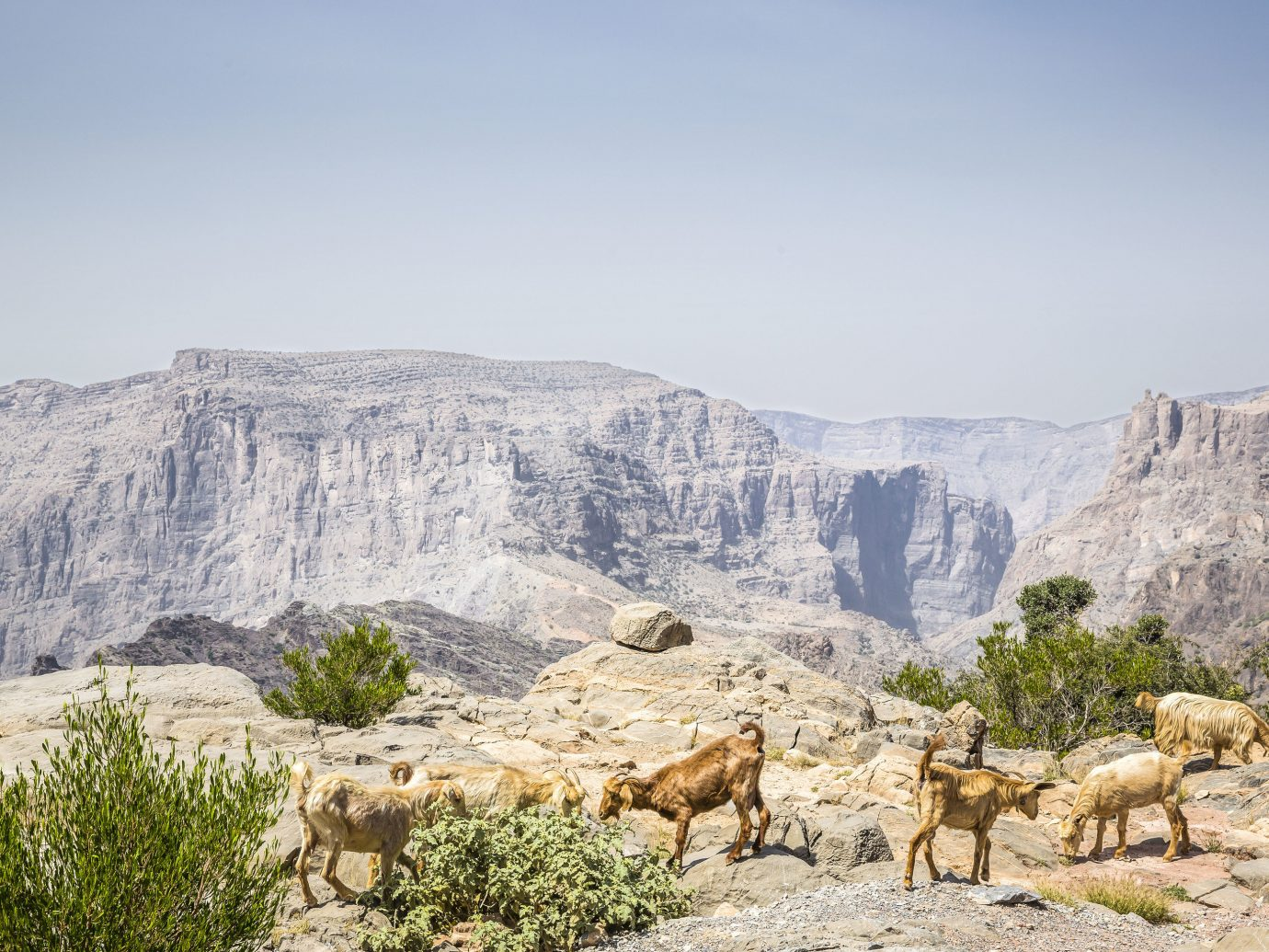 Hotels mountain outdoor sky cow mountainous landforms animal landform mammal wilderness herd canyon wadi mountain range valley cattle badlands landscape rock plateau group Adventure geology walking hillside