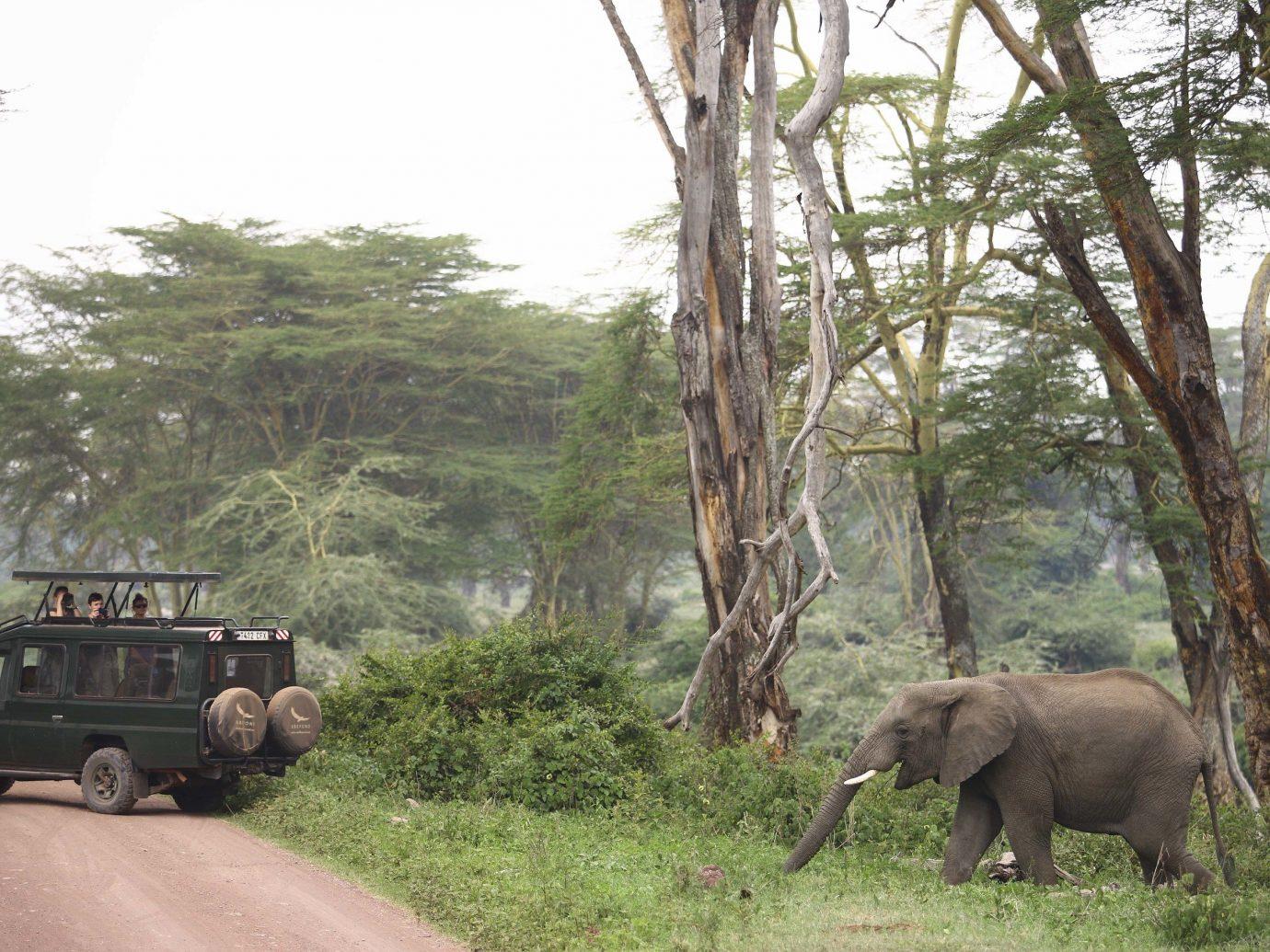 andBeyond Ngorongoro Crater Lodge, Tanzania African Safari Elephant