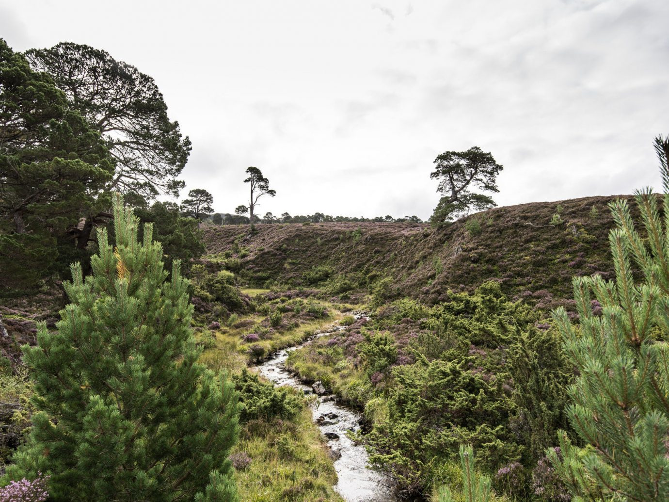 Hotels tree outdoor sky plant conifer ecosystem rock mountain hill landscape cliff terrain flower valley hillside lush