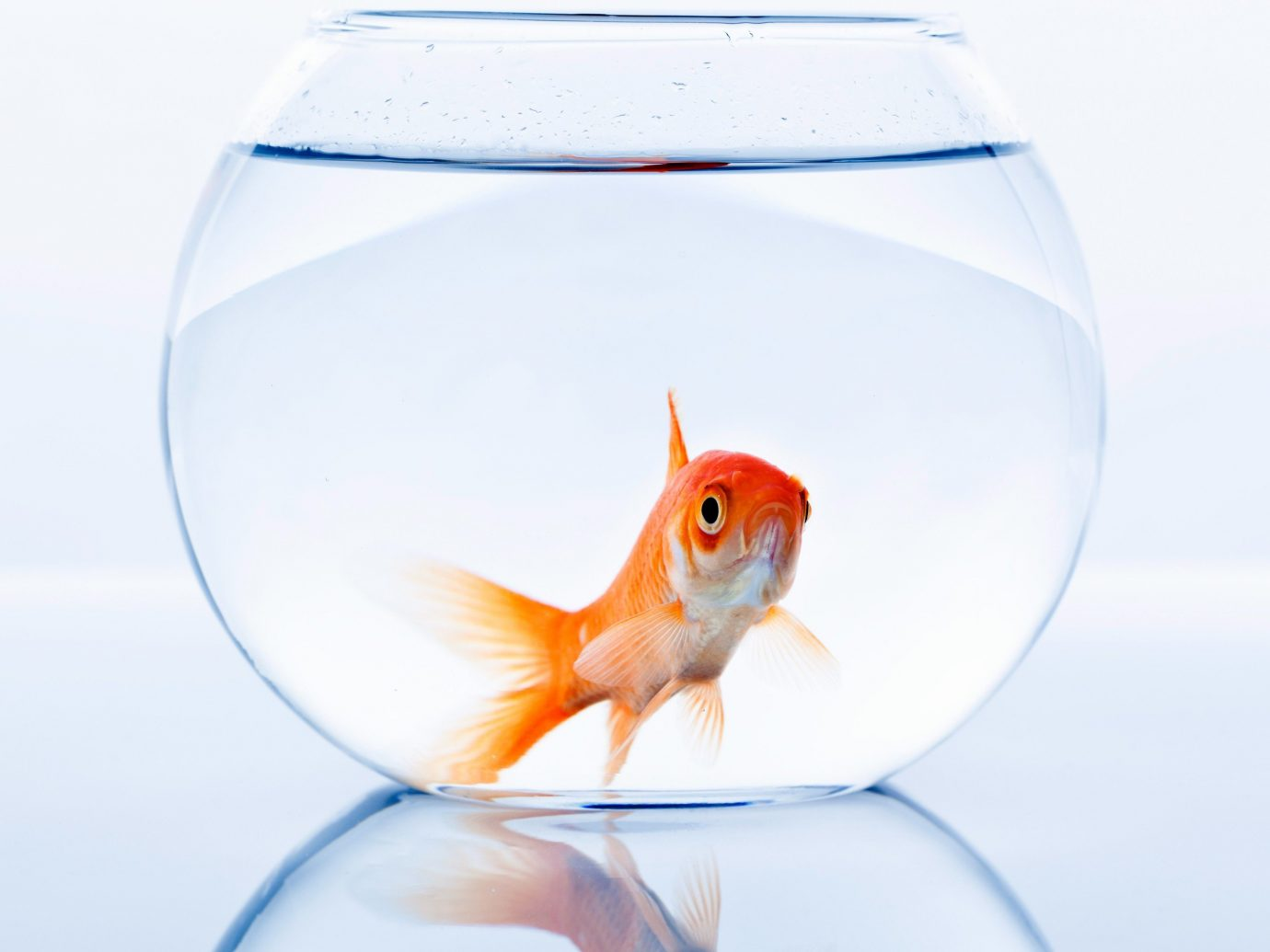 Hotels Offbeat fishbowl bubble goldfish fish vertebrate reflection vessel illustration bell jar