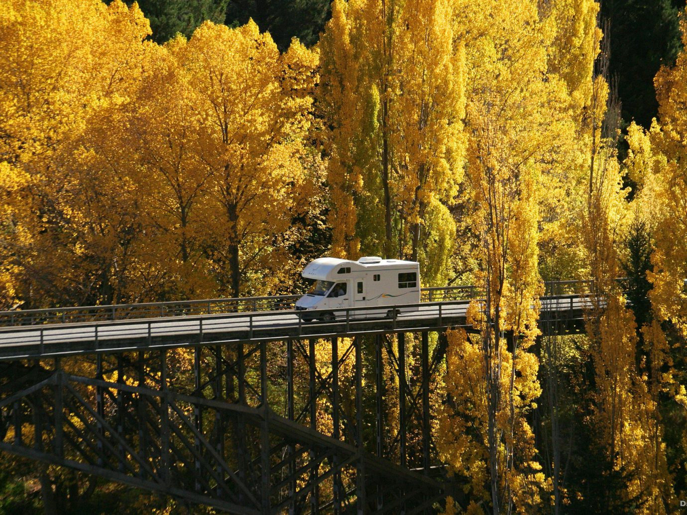 autumn bridge calm caravan Fall Forest Nature Oceania remote Roads roadtrip serene trees Trip Ideas tree outdoor habitat wilderness reflection season natural environment leaf plant morning poplar woody plant sunlight park woodland branch landscape evening wooded