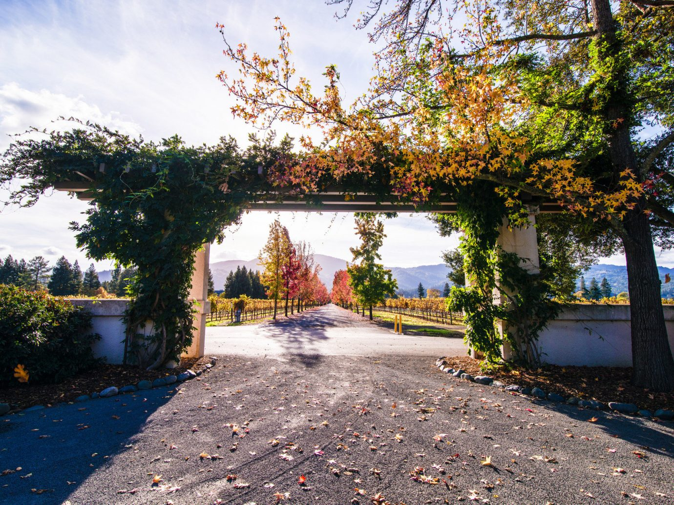 autumn calm entrance Fall Fall leaves festival foliage Greenery leaves Mountains Nature remote serene Travel Tips trees Trip Ideas tree outdoor sky ground neighbourhood house season leaf estate woody plant home flower Garden way plant