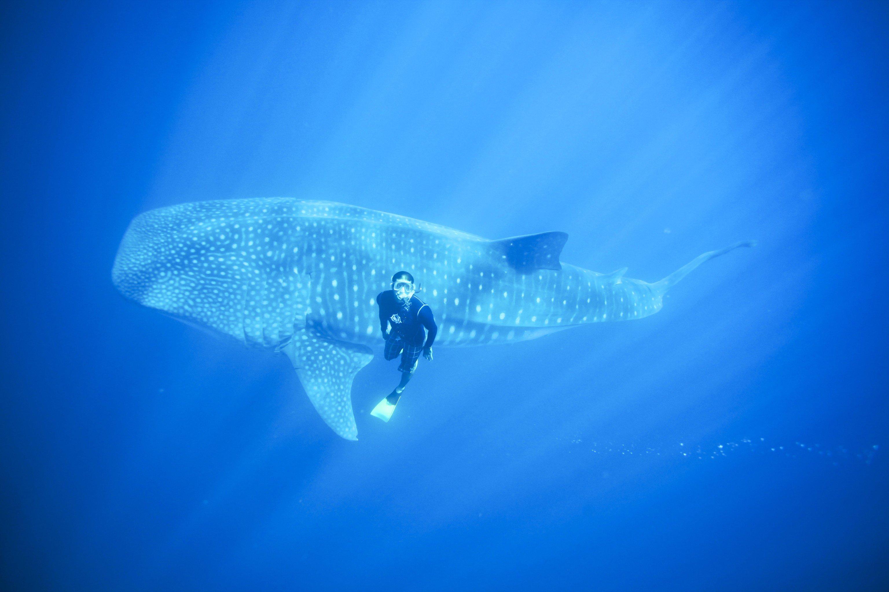 Trip Ideas sky outdoor blue marine biology underwater biology Ocean reef fish freediving deep sea fish computer wallpaper ocean floor