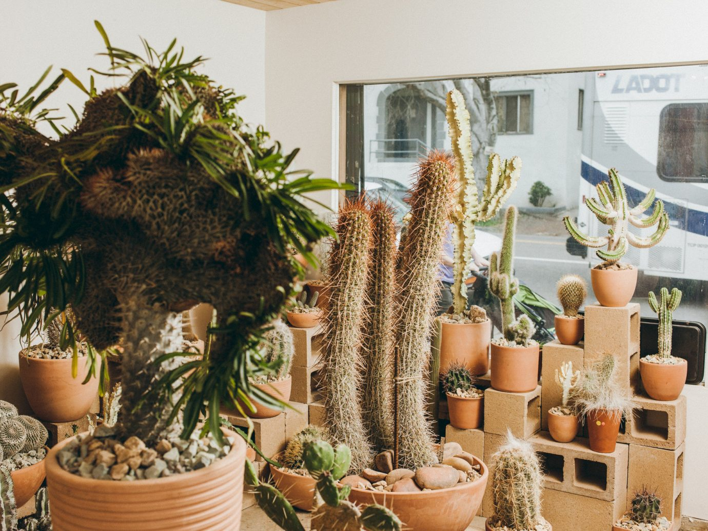 Offbeat Style + Design Travel Trends plant cactus flowerpot flower flowering plant hedgehog cactus caryophyllales furniture decorated