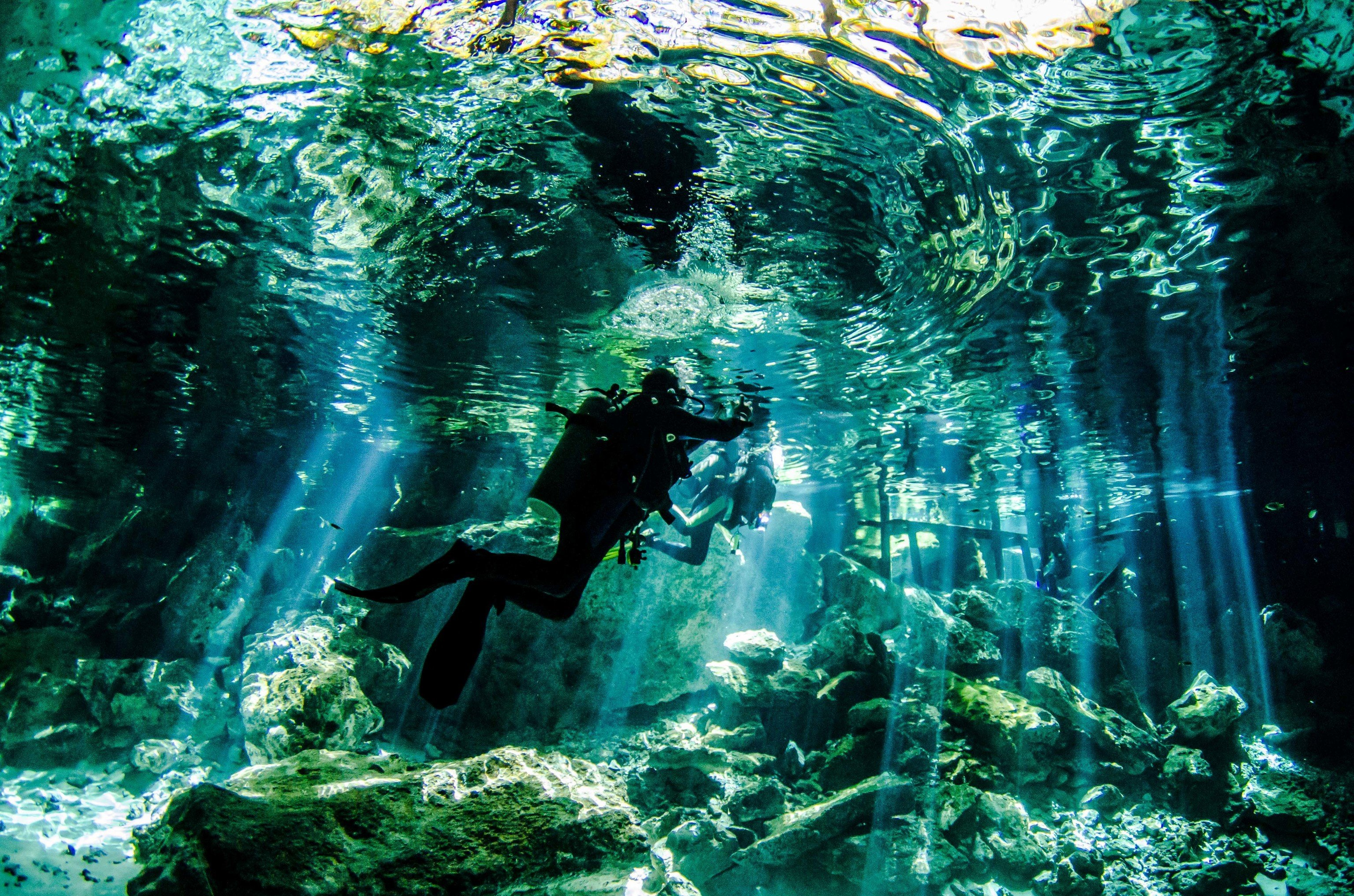 Hotels Trip Ideas Nature green ecosystem underwater Forest rock tree marine biology coral reef organism underwater diving Jungle reef old growth forest Scuba Diving surrounded