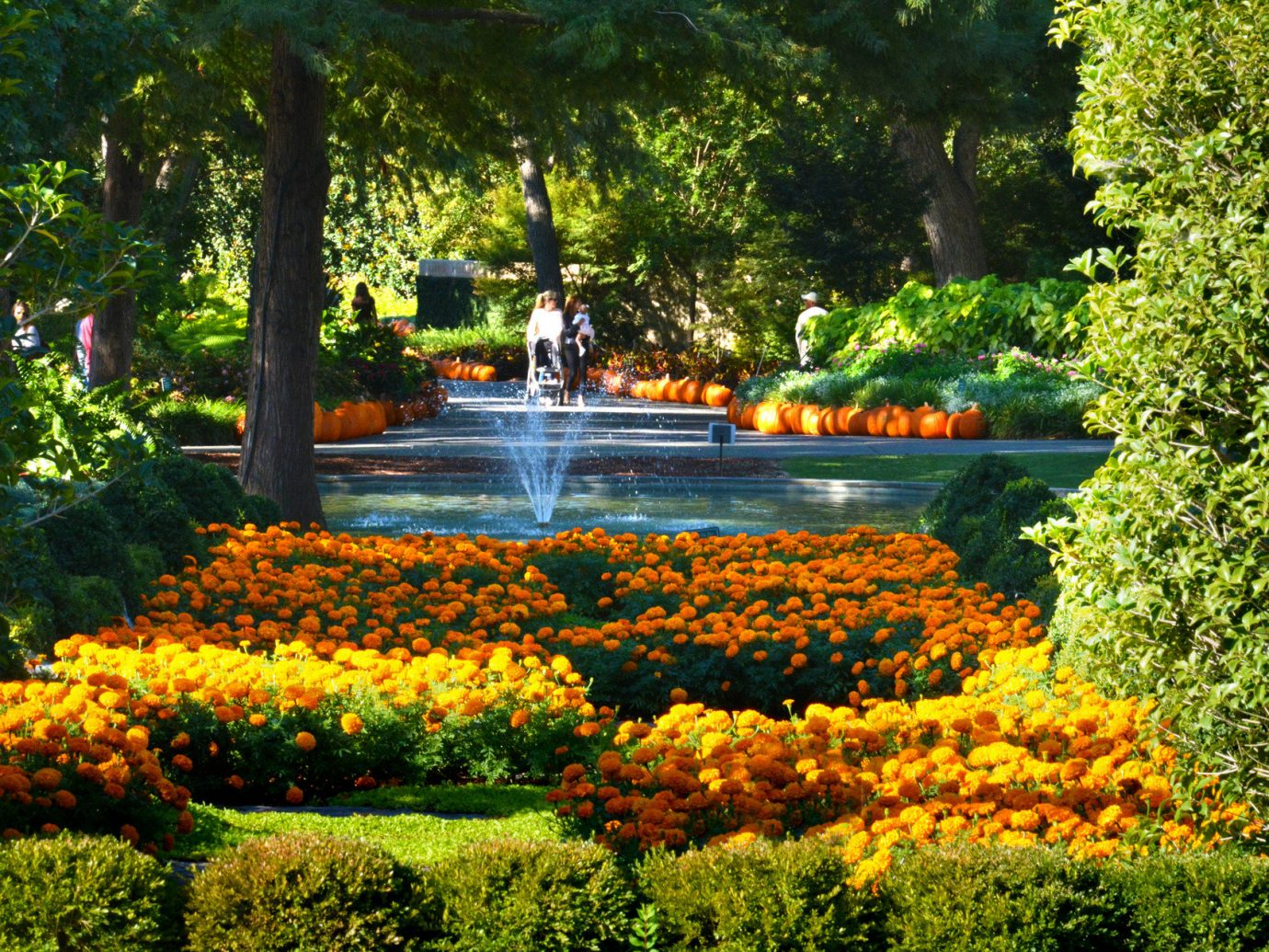 Trip Ideas tree outdoor Nature flower Garden flora botany plant season leaf autumn botanical garden park shrub pond bushes Forest surrounded