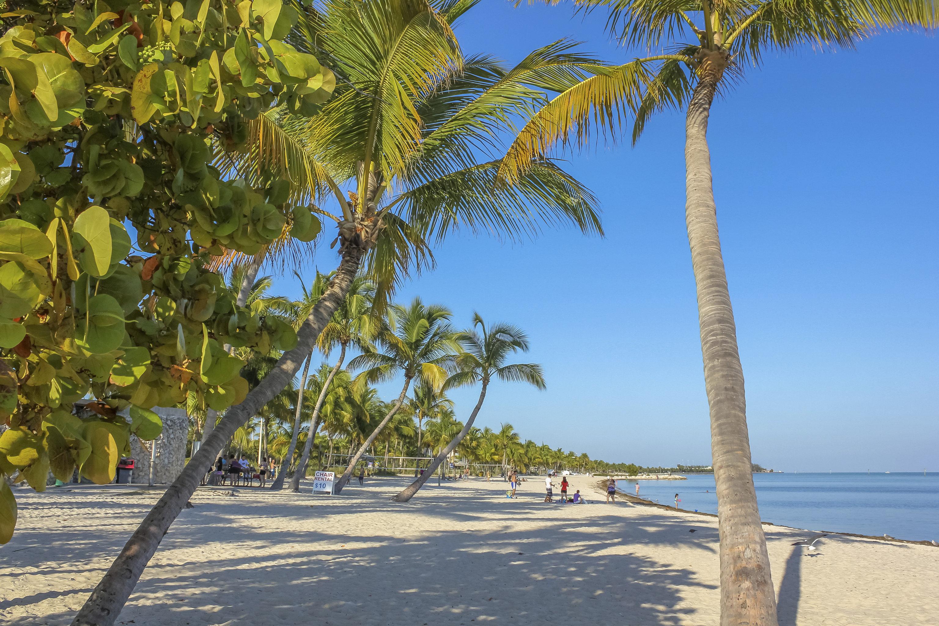 Trip Ideas outdoor tree sky Beach palm plant palm family arecales woody plant vacation Coast Sea tropics walkway shore