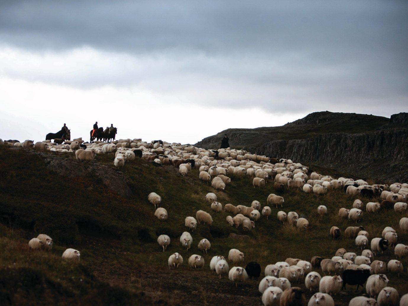 Arts + Culture sky sheep outdoor grass herd rock field cloud mountain hill Sea landscape flock pasture hillside day