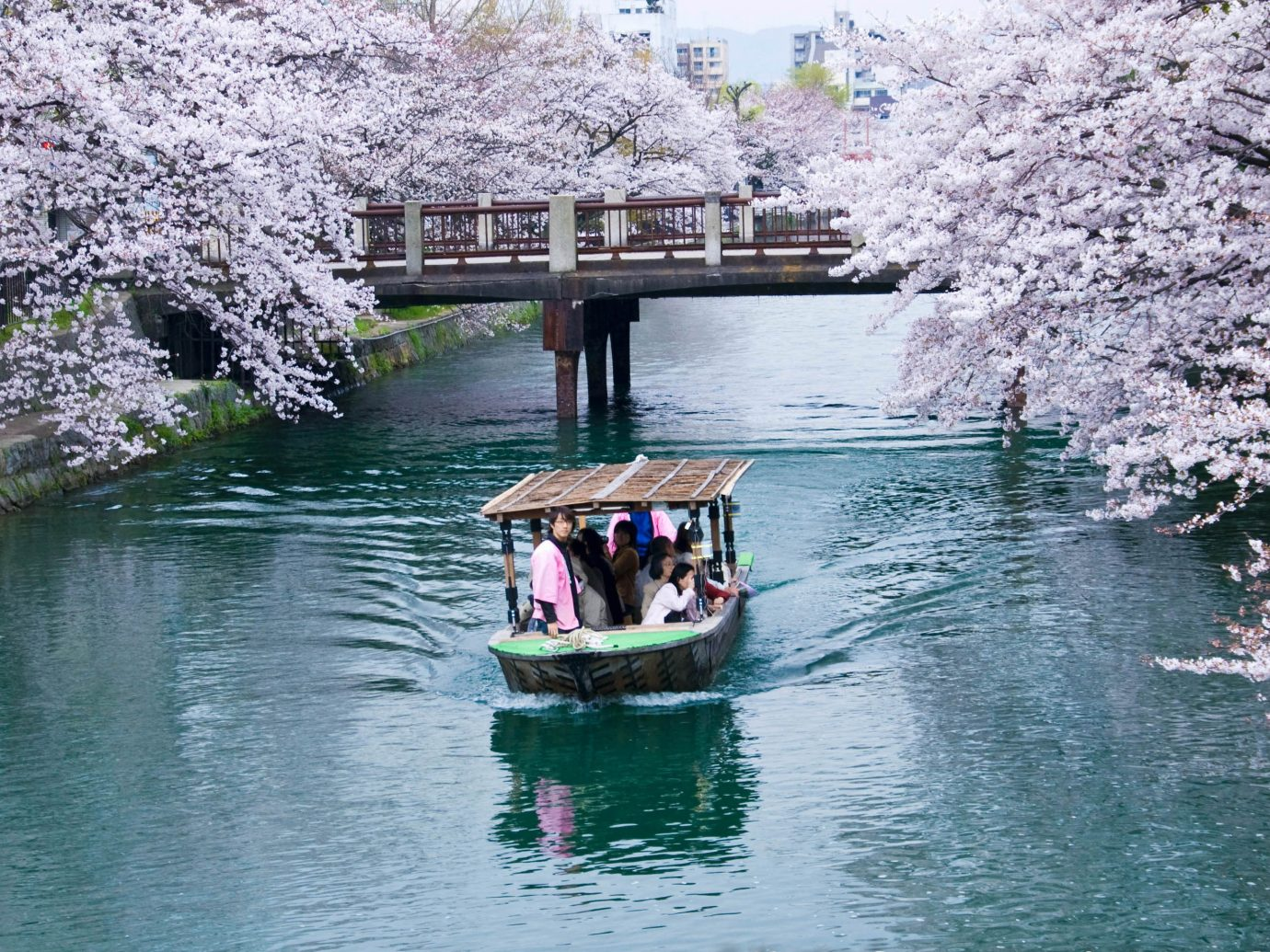 Trip Ideas water outdoor flower cherry blossom plant River traveling blossom waterway Lake