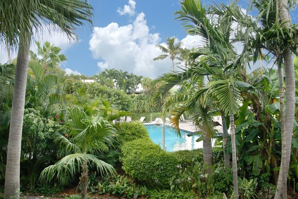 Florida Hotels tree outdoor plant palm vegetation ecosystem tropics arecales palm tree Jungle biome Resort plantation rainforest landscape coconut botanical garden sky elaeis lined shade area sandy