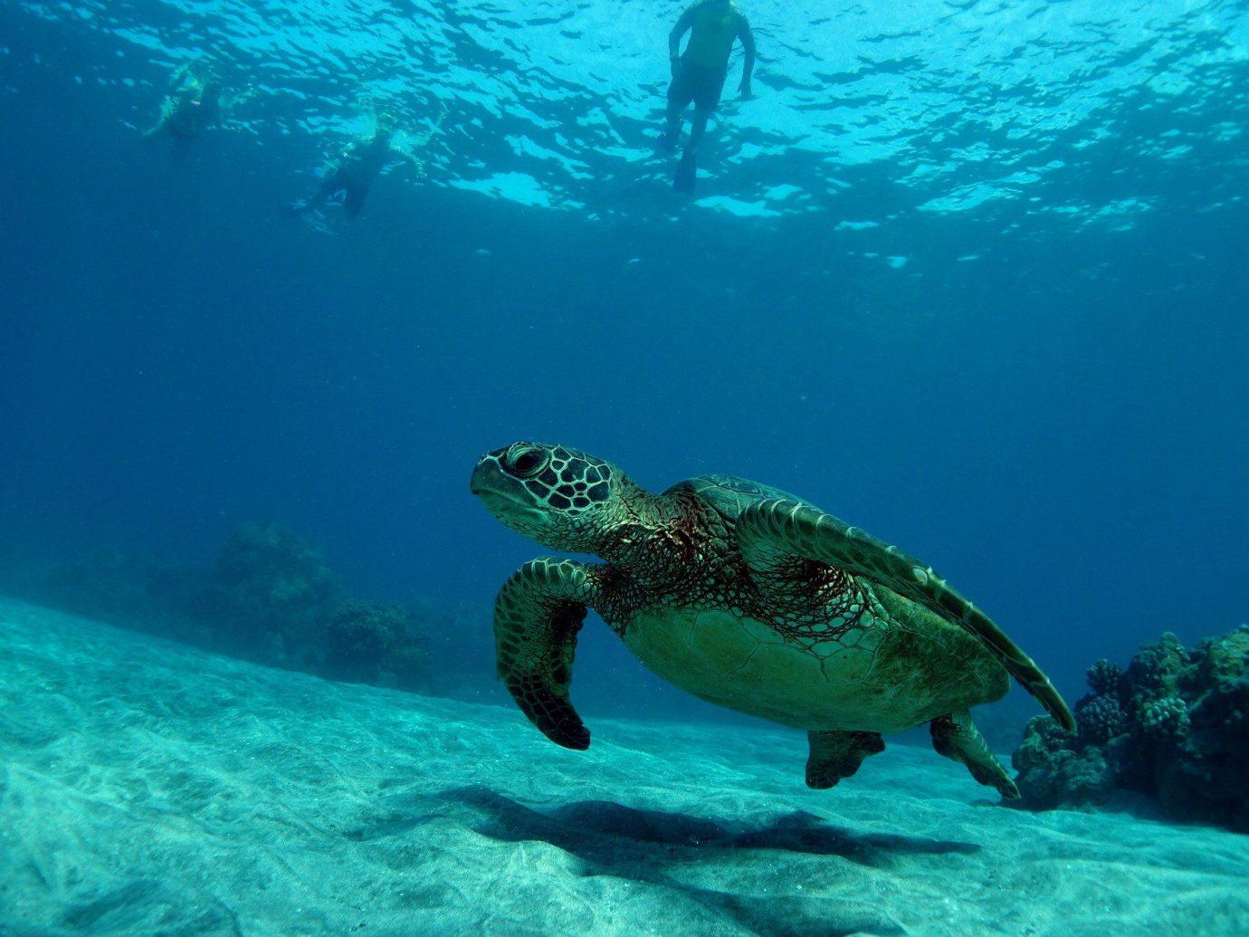 Hotels Trip Ideas sea turtle water Sea underwater turtle loggerhead marine biology Ocean organism Scuba Diving underwater diving reef ocean floor