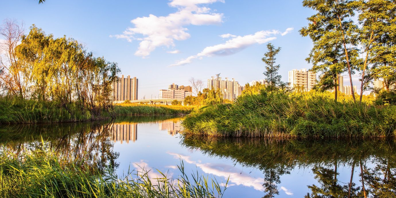 Offbeat tree outdoor sky water Nature pond River habitat reflection Lake natural environment ecosystem grass plant woody plant morning autumn leaf waterway landscape wetland flower park meadow sunlight Garden surrounded bushes land