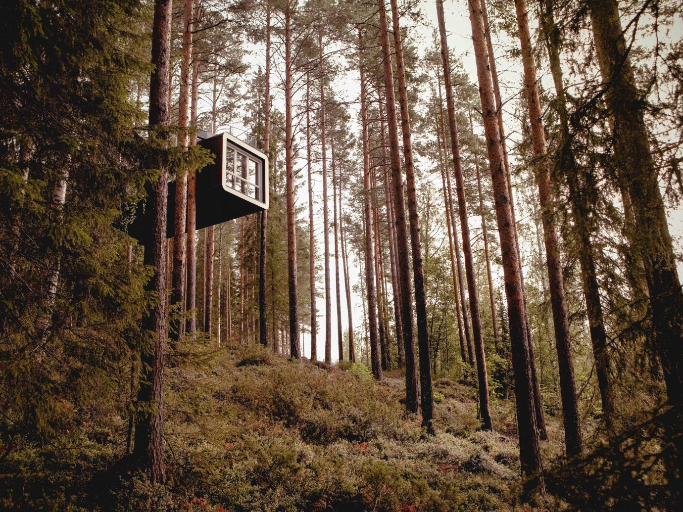 Boutique Hotels Sweden tree outdoor Nature woodland Forest woody plant path leaf plant wood sunlight old growth forest wooded biome autumn temperate coniferous forest grove spruce fir forest temperate broadleaf and mixed forest house landscape branch state park area