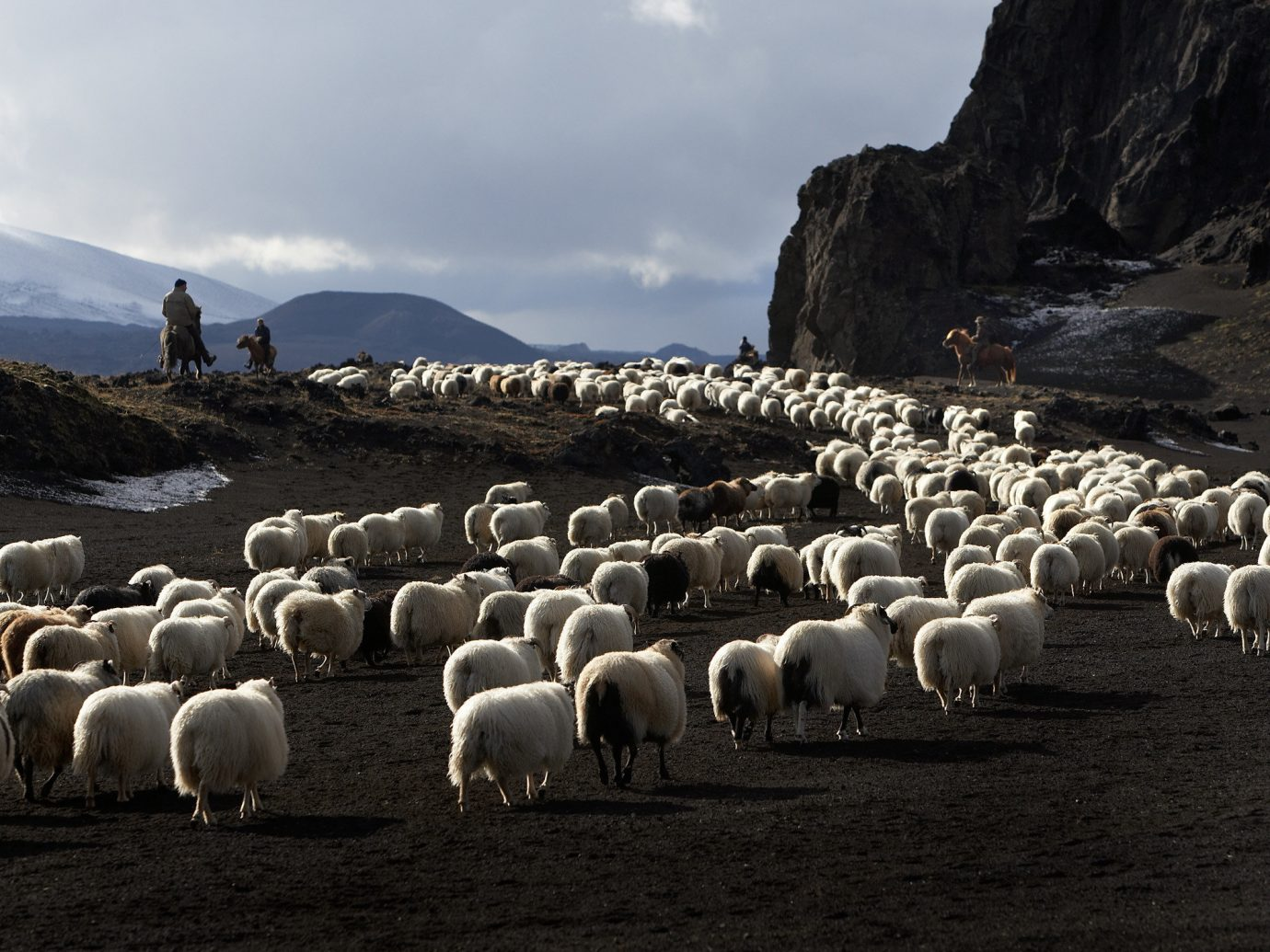 Iceland Travel Tips sheep sky outdoor grass herd mammal mountain sheeps flock Sea hillside