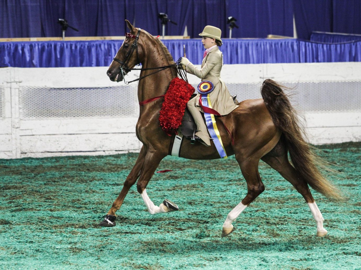 Offbeat horse horse harness outdoor mammal western riding equestrianism english riding animal western pleasure horse like mammal stallion mare sports animal sports jockey equestrian sport barrel racing reining animal training eventing