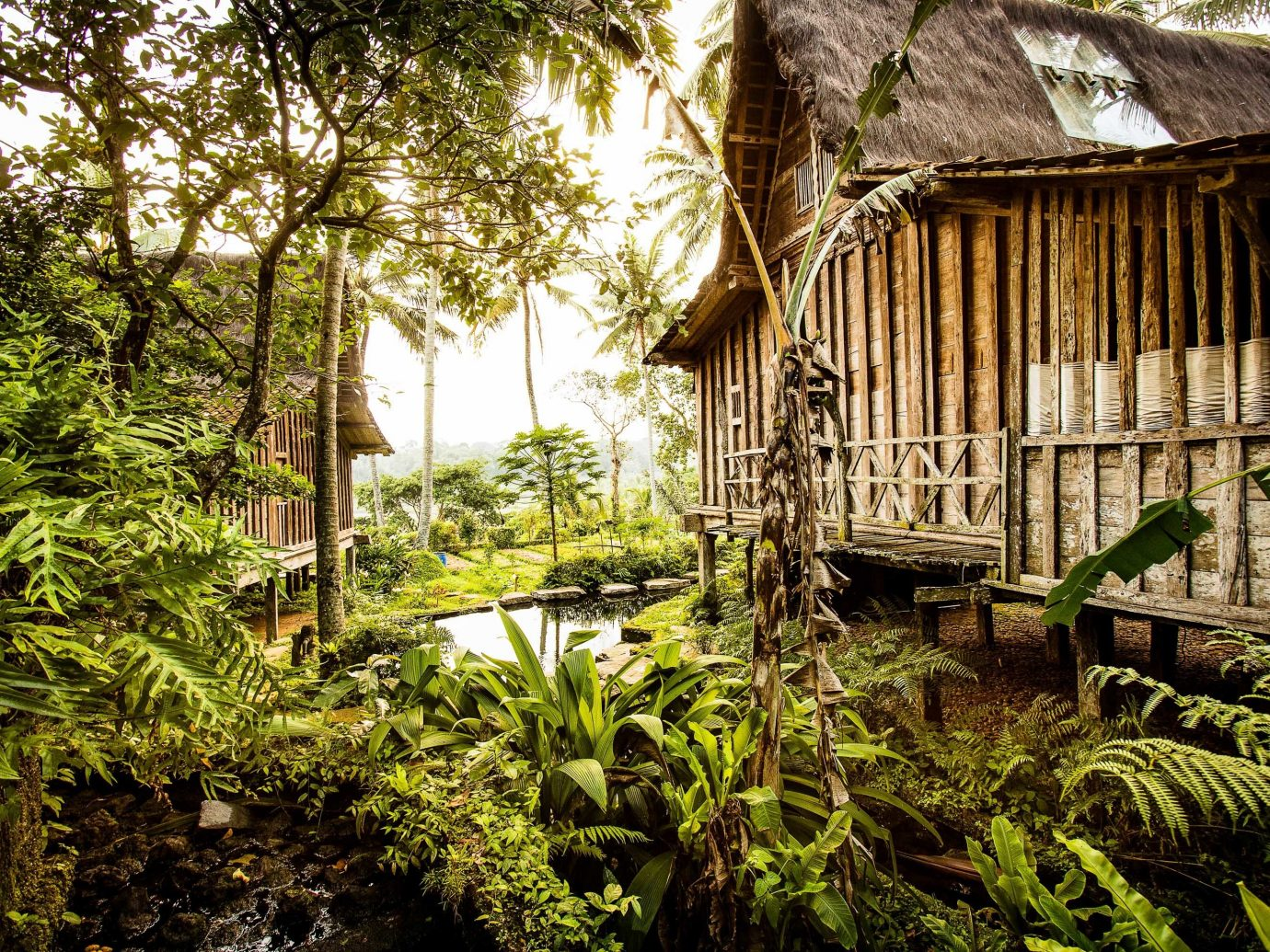Boutique Hotels Hotels Nature vegetation plant tree Jungle leaf house rainforest Forest old growth forest arecales grass water landscape cottage outdoor structure woodland plantation