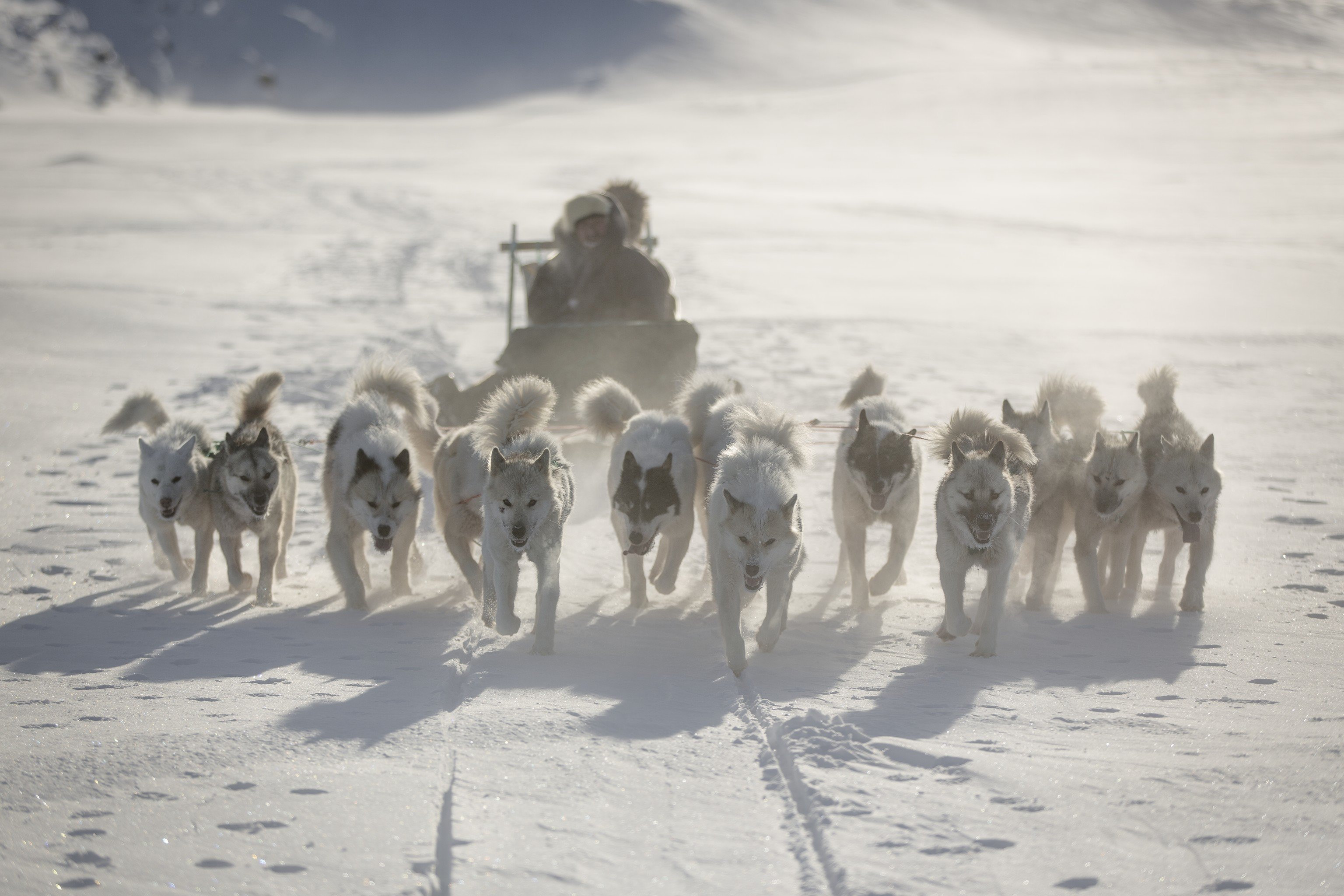 Trip Ideas outdoor snow Dog mammal dog sled mushing vehicle sled dog racing Winter group dog like mammal animal sports sandy