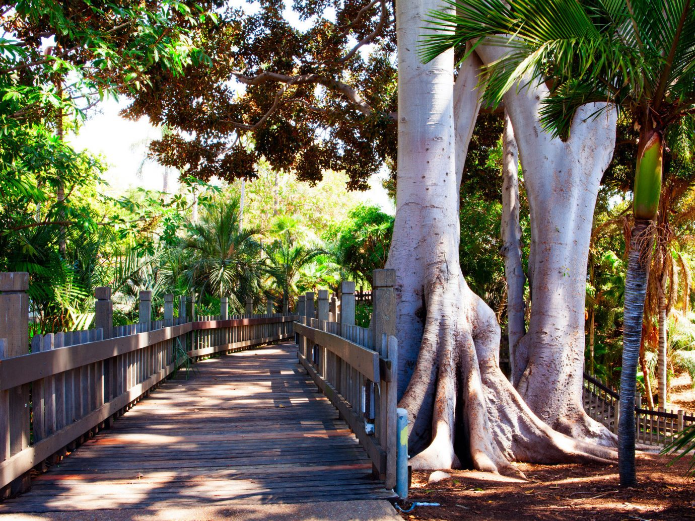 Travel Tips tree outdoor ground plant arecales flora park leaf flower walkway outdoor structure leisure Garden palm tree recreation spring plantation branch botanical garden shade surrounded