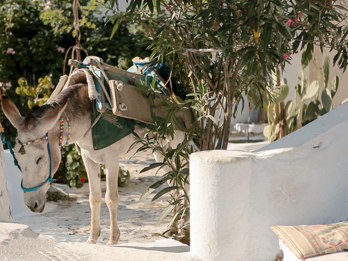 Budget tree art home horse like mammal sculpture