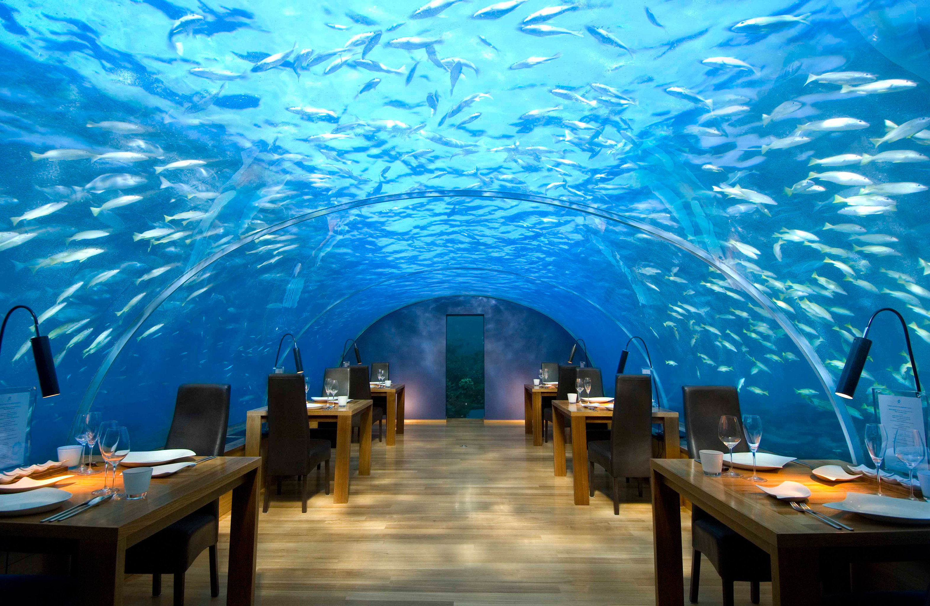 Bar Dining Drink Eat Elegant Entertainment Hotels Natural wonders Ocean Scenic views Wildlife table chair screenshot theatre