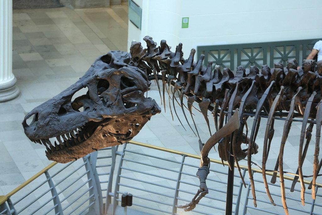 animal reptile Trip Ideas dinosaur rack metal tourist attraction