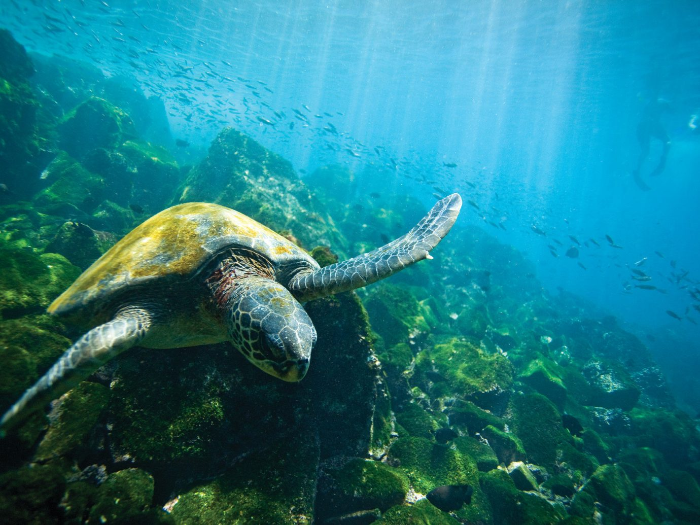 National Parks Trip Ideas outdoor reptile turtle animal marine biology underwater biology sea turtle Sea loggerhead coral reef