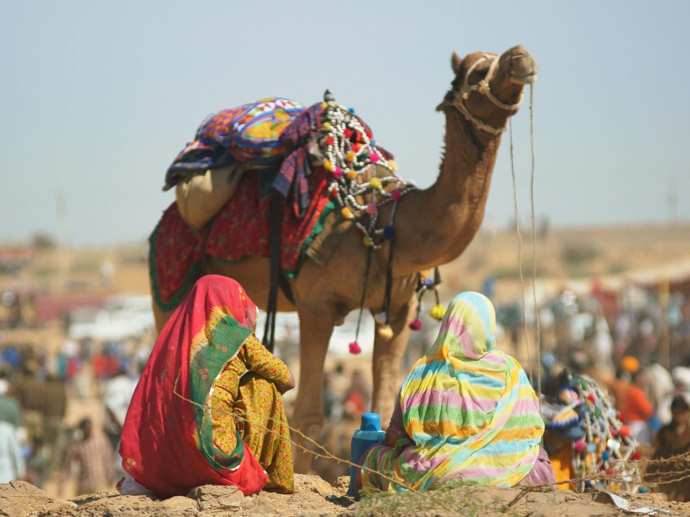 Trip Ideas sky Camel outdoor mammal camel like mammal arabian camel Sport colorful dancer
