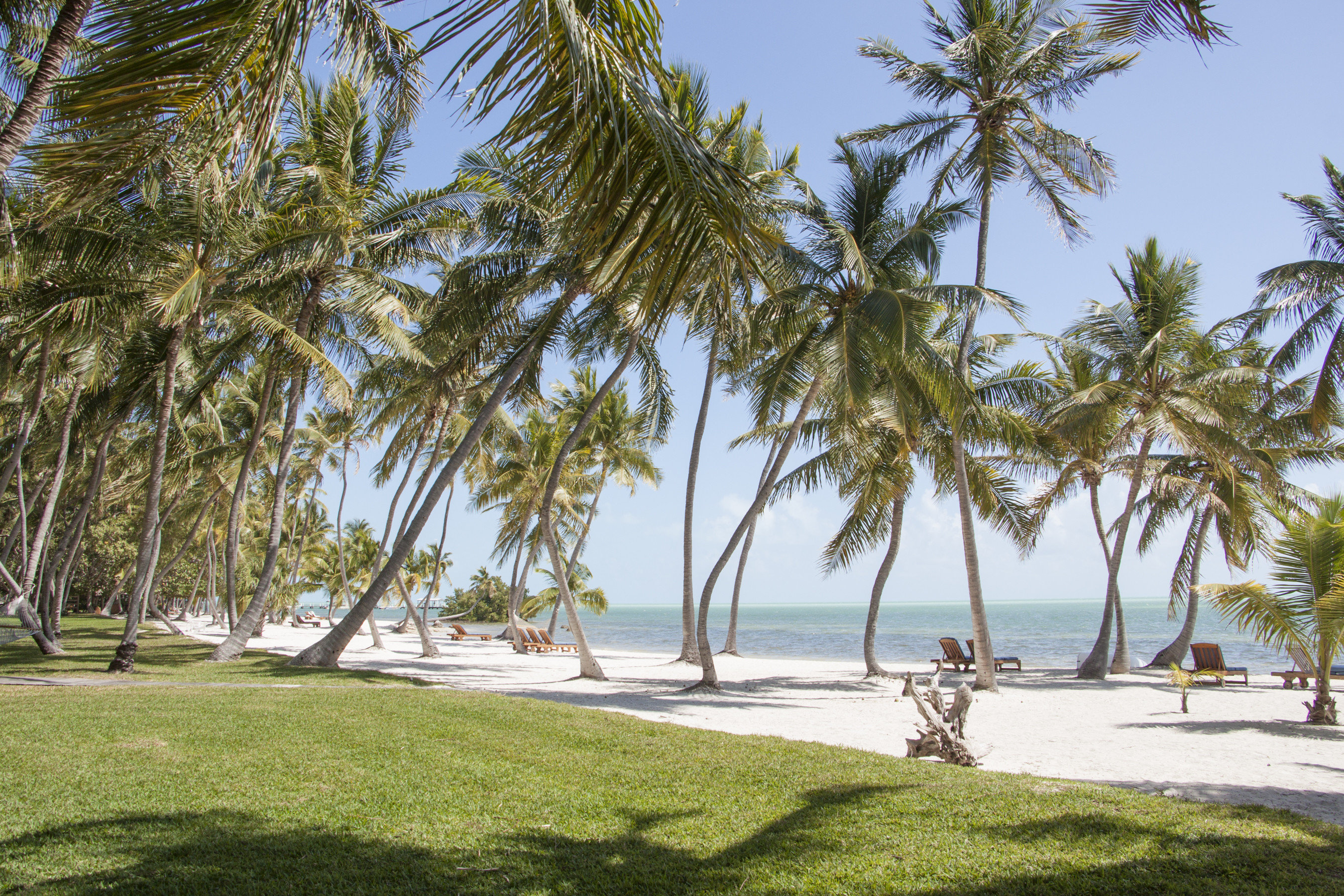 Hotels Romance tree outdoor grass palm sky plant water palm tree arecales tropics Beach Resort vacation caribbean Sea date palm coconut shore