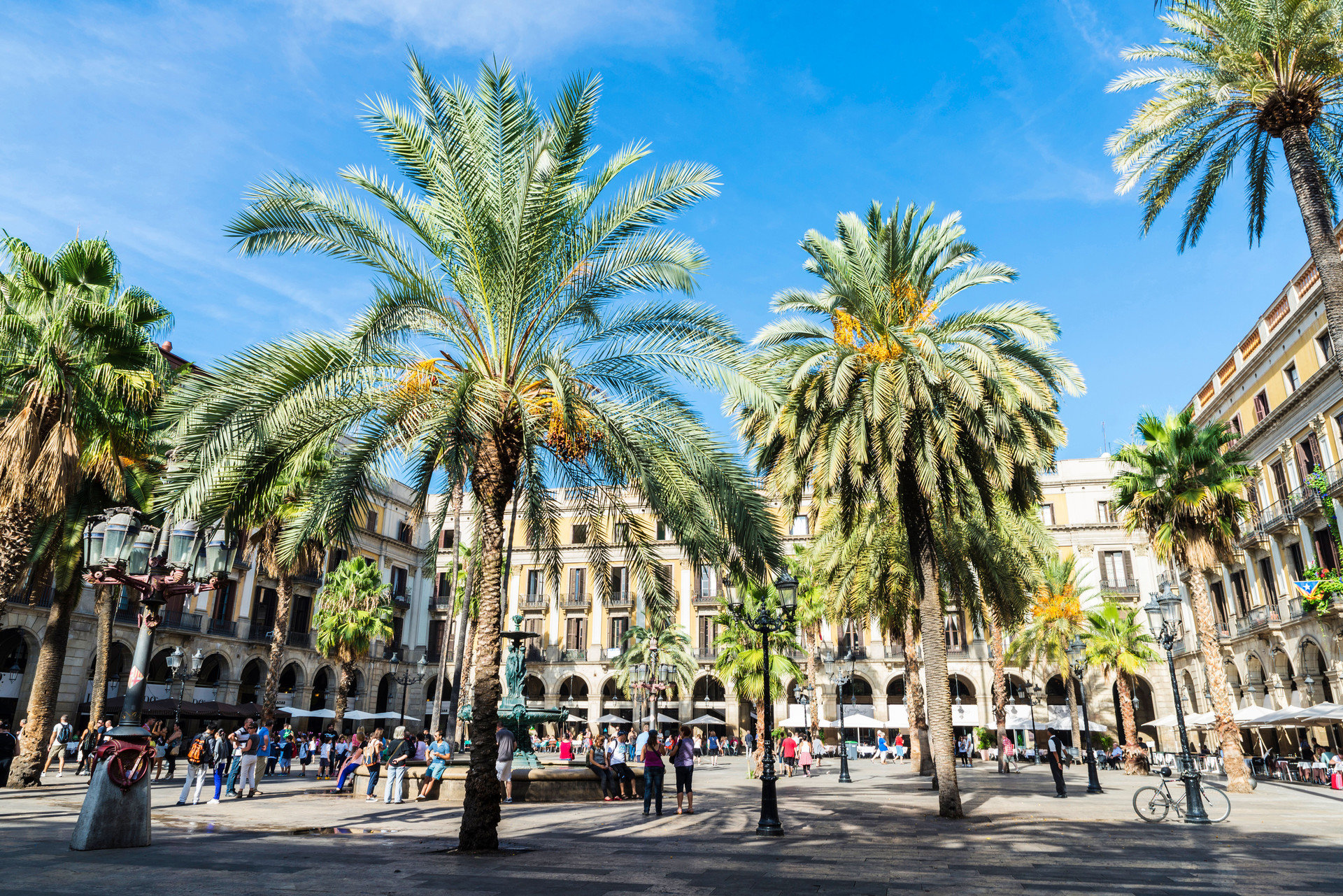 Romance Trip Ideas tree outdoor road sky palm street plant palm family botany vacation plaza arecales woody plant land plant date palm walkway borassus flabellifer park flower lined town square square Resort