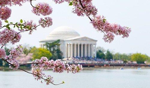 Health + Wellness Hotels Spa Retreats Trip Ideas flower outdoor cherry blossom blossom waterside plant spring branch floristry shore