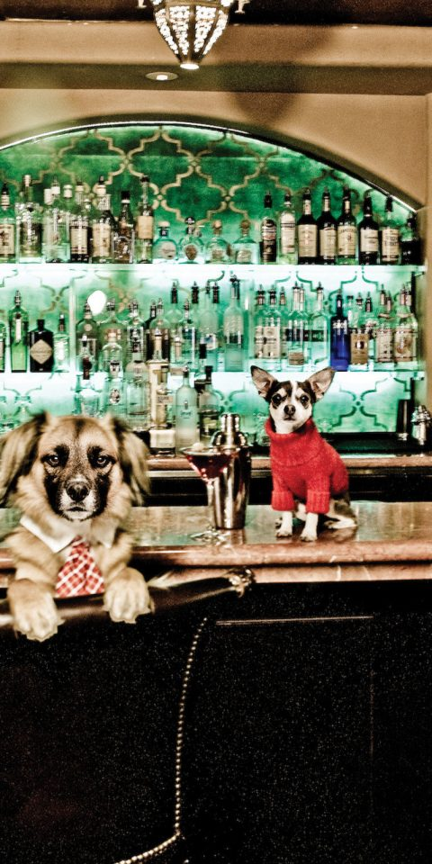 Hotels Dog indoor Bar