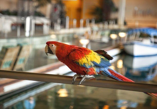 Offbeat Bird parrot animal colorful vertebrate outdoor beak red macaw fauna railing colored