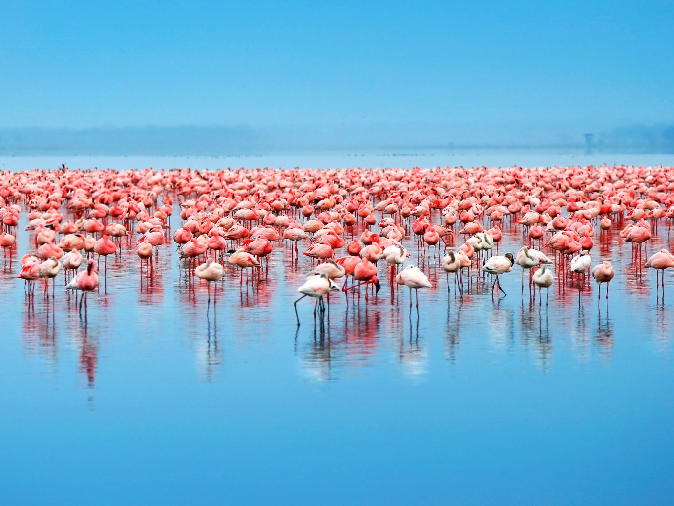 Offbeat sky water flamingo outdoor Beach water bird Bird Sea Nature lined several