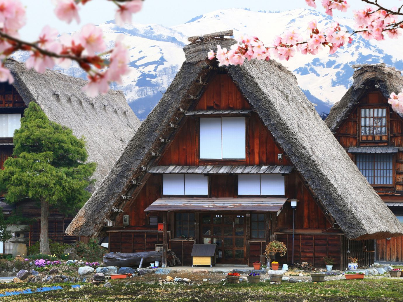 Trip Ideas flower plant house home tree building spring cherry blossom facade cottage roof