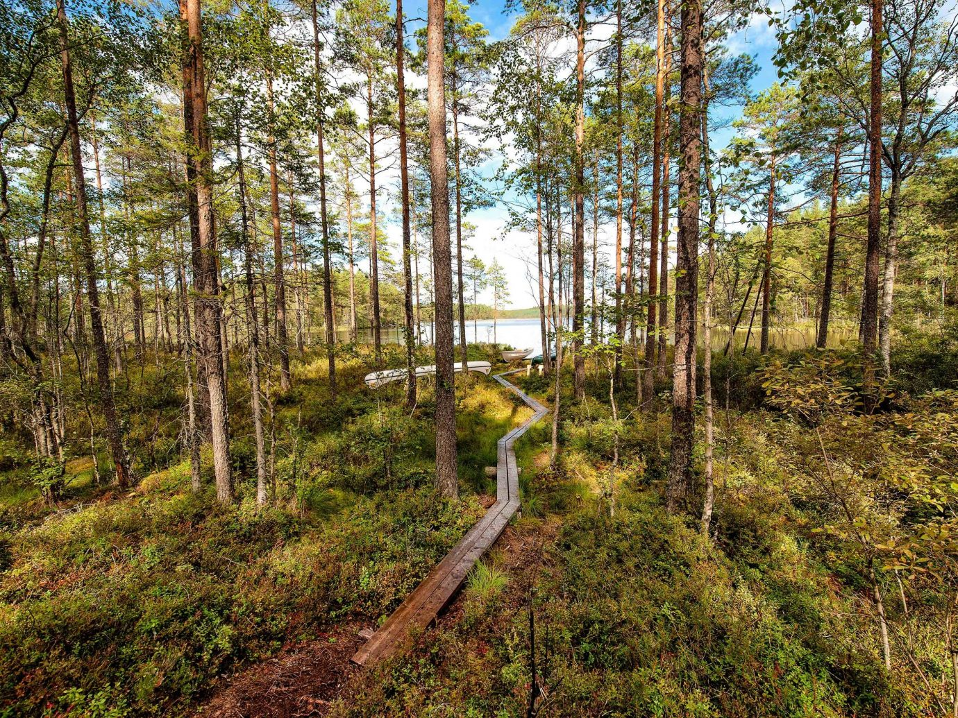 Boutique Hotels Sweden grass tree outdoor ecosystem path Forest nature reserve wilderness woodland vegetation plant old growth forest spruce fir forest temperate broadleaf and mixed forest trail wood biome temperate coniferous forest green wooded valdivian temperate rain forest wetland Jungle shrubland landscape tropical and subtropical coniferous forests bog plant community state park rainforest area lush