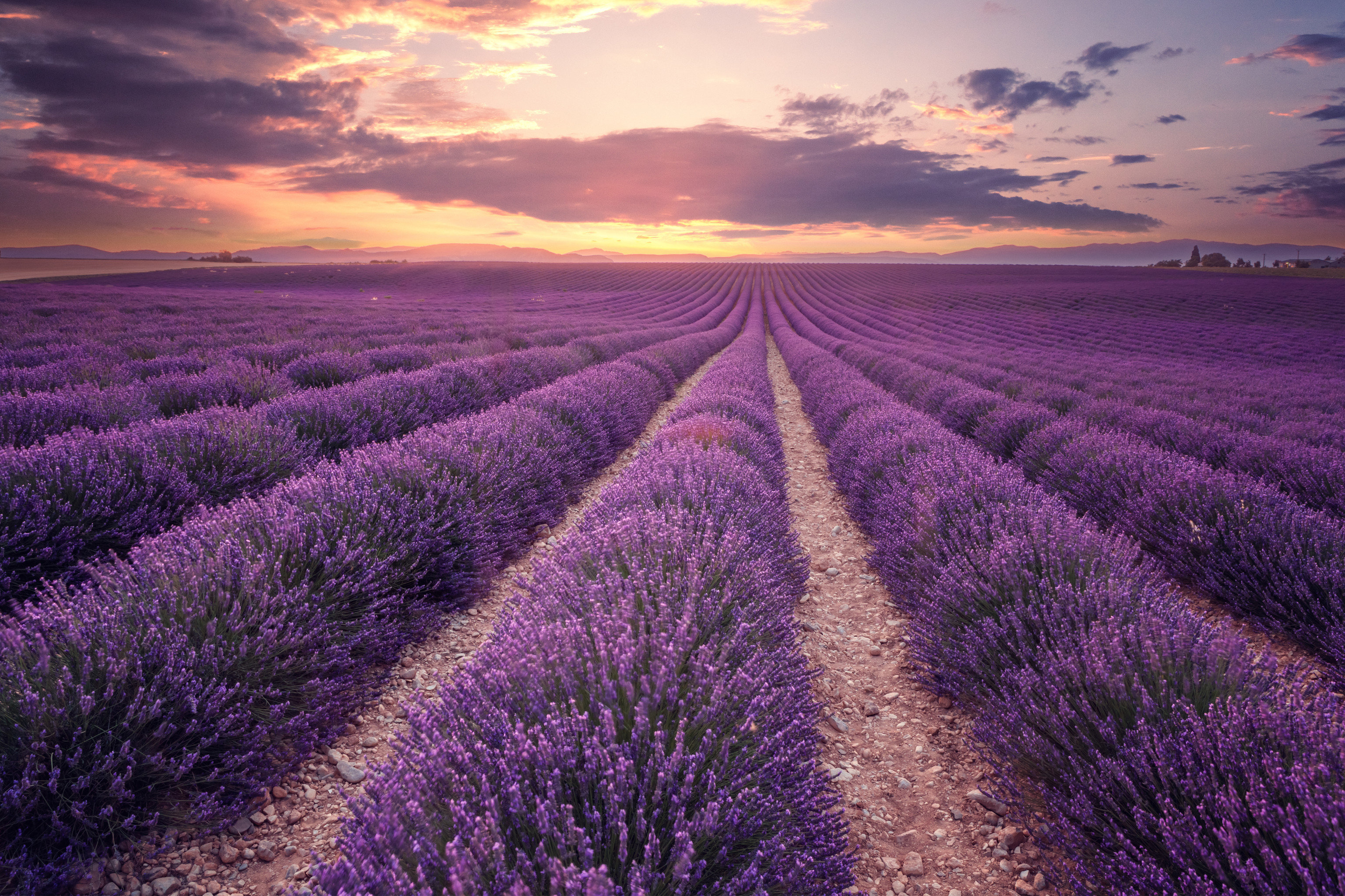 Hotels Road Trips Trip Ideas sky outdoor field purple english lavender lavender dawn morning crop phenomenon atmosphere prairie horizon sunlight landscape cloud ecoregion grass family evening flower agriculture grass meadow spring computer wallpaper sunrise afterglow dusk commodity clouds day