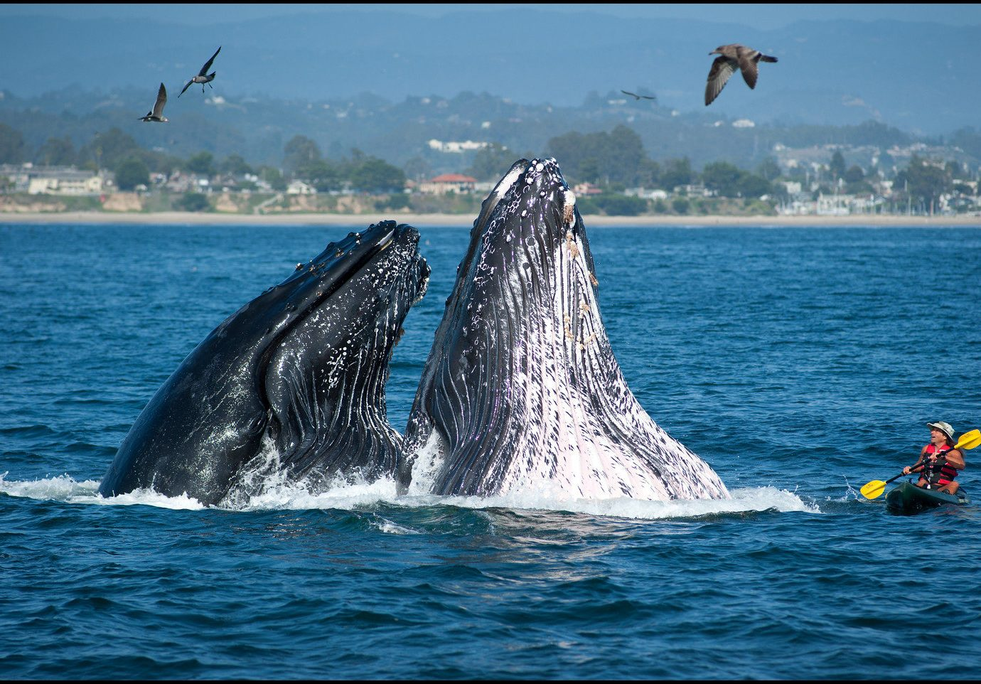 Trip Ideas water outdoor sky aquatic mammal animal mammal marine mammal vertebrate whales dolphins and porpoises marine biology Boat humpback whale Ocean whale Sea grey whale biology wind wave