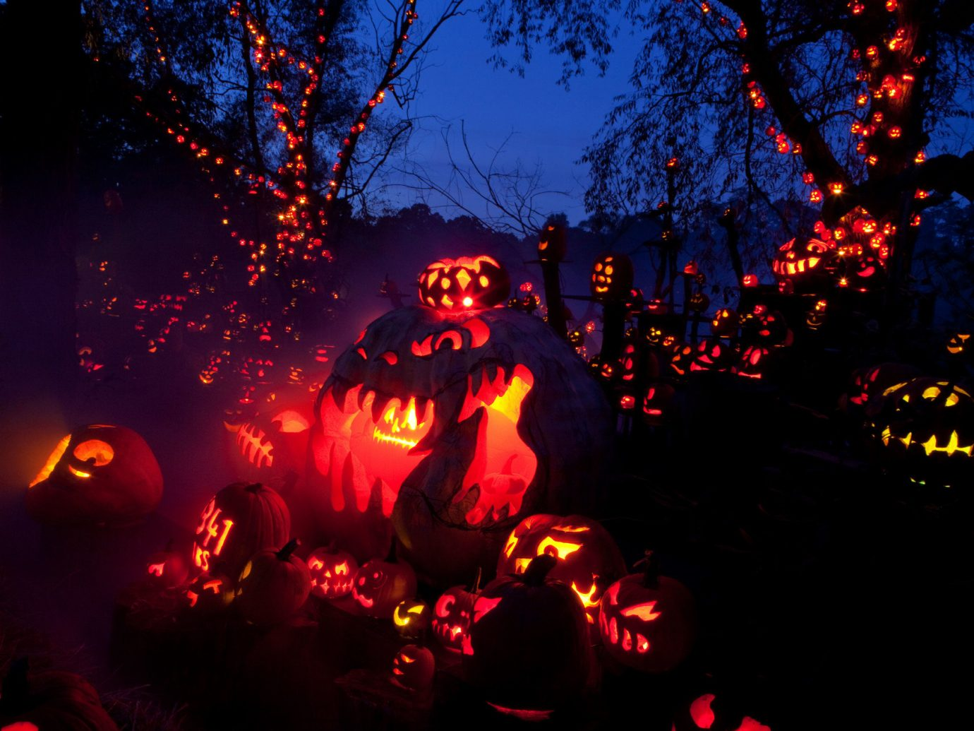 art artistic artsy Design festive glow halloween holiday lights night night lights orange Outdoors pumpkins trees Trip Ideas tree outdoor light darkness geological phenomenon christmas decoration christmas lights
