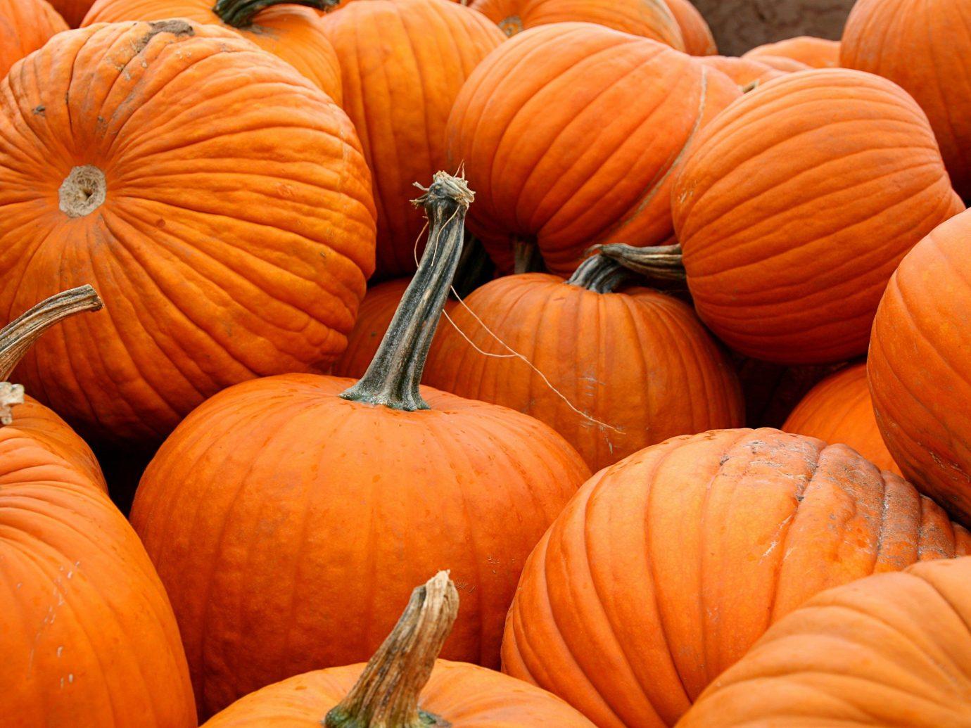 Trip Ideas squash fruit pumpkin winter squash calabaza carving autumn cucurbita produce gourd