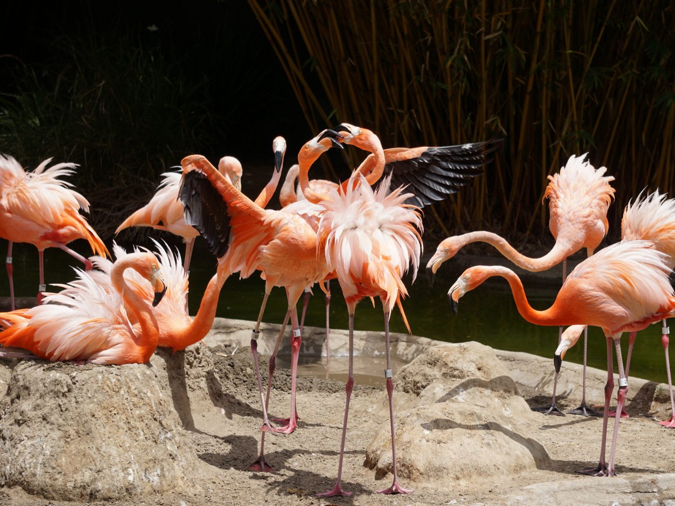 Family Travel Trip Ideas Weekend Getaways Bird flamingo outdoor animal aquatic bird ground flock vertebrate standing group beak fauna water bird zoo colored