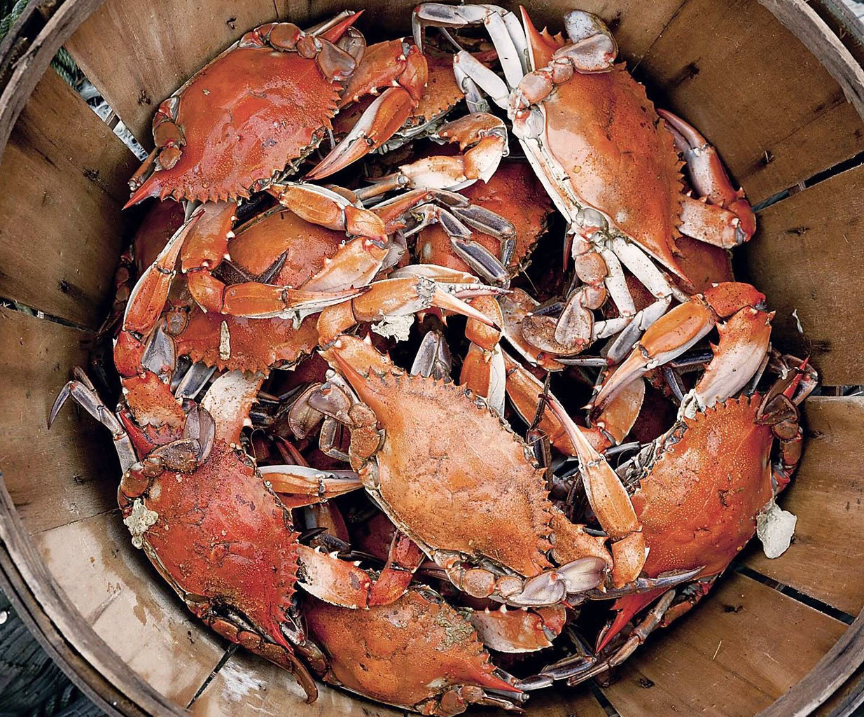 Secret Getaways Trip Ideas arthropod animal invertebrate food crab dungeness crab crustacean decapoda Seafood american lobster homarus animal source foods crab boil plant fish king crab lobster soft shell crab pan shellfish shrimp meat dirty cooked sliced
