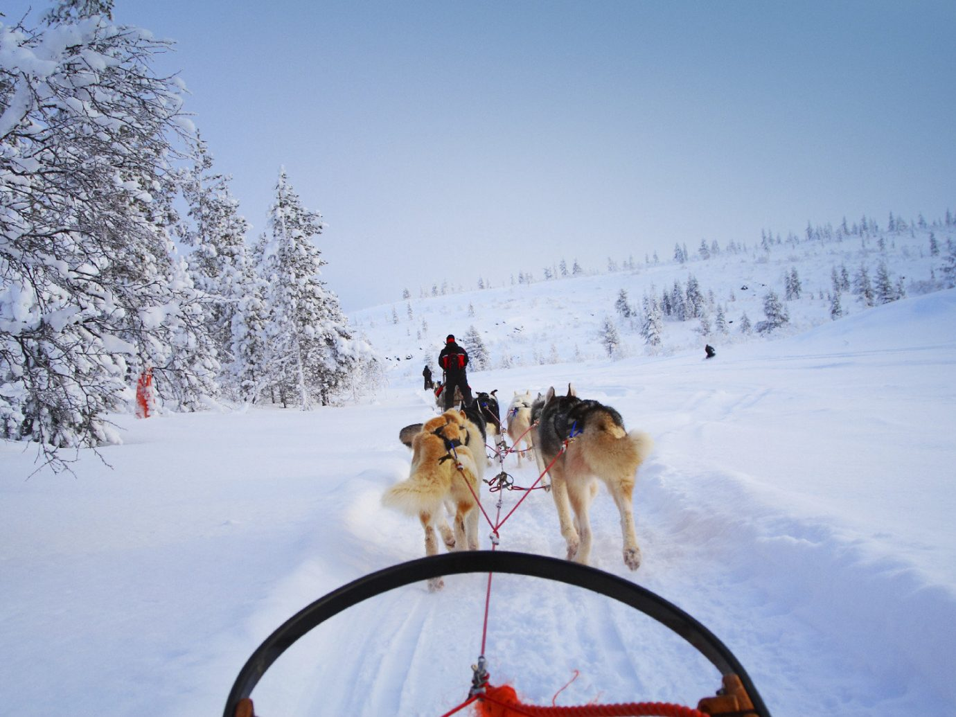 Adventure Trip Ideas snow outdoor sky transport dog sled vehicle land vehicle mushing Winter season sled dog racing sled