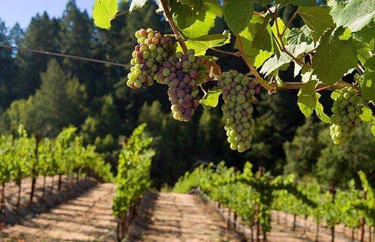 Hotels tree agriculture outdoor grape Vineyard plant produce fruit vitis land plant food grapevine family flowering plant flower shrub